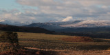 Ben Lomond and the Arrochar Hills from near Carbeth