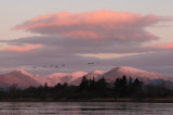Sunrise at Wards Pond, RSPB Loch Lomond