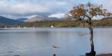 Loch Lomond at Milarrochy Bay