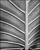 Tropical Leaf Structure