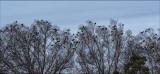 A Huddle of Birds
