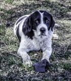 Pearsons Farm  Dog