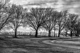 Phalanx of Trees