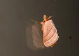 moth  9505.jpg