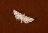 moth  0632.jpg