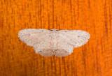 moth  0640.jpg