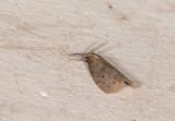 moth  0642.jpg