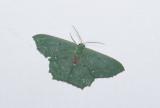 moth  0649.jpg