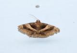 moth  1507.jpg