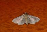 moth  1509.jpg