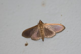 moth  2450.jpg