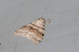 moth  2453.jpg