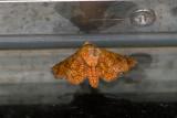 moth  4956.jpg