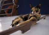 Eleanor, deck watch