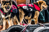 dogs on boats, all geared up