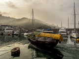 Foggy Morning in the Typhoon Shelter