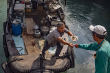 Cook-aboard sampan delivering hot lunch, Typhoon Shelter style