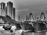 Fishing Trawlers, Aberdeen Typhoon Shelter, Hong Kong Island