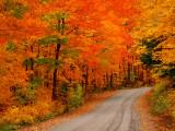 Muskoka Fall