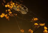 Spider Web at night