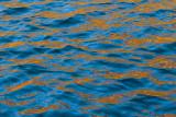 Yellow maple reflections