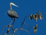2014_backyard_birds
