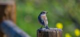 meadow preserve-5360.jpg