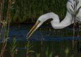 Meadow Preserve-6173.jpg