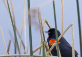 Meadow Preserve-6213.jpg