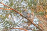 Owls-9130.jpg