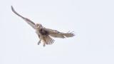 Owls-9214.jpg