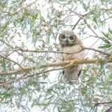 owls_for_brad