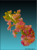 Flowers and Animals -