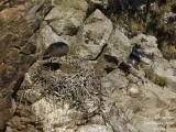 9272 Black Stork