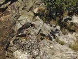 9265 Black Stork