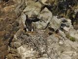 9263 Black Stork