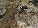9258 Black Stork