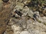 9256 Black Stork