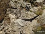 9255 Black Stork