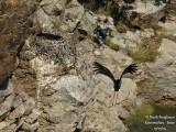 9254 Black Stork