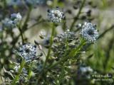 135 Blue flowers