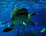 Swim WithThe Fishes 03-29-16