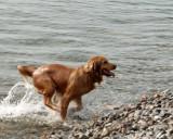 Dogs 1391 copy.jpg