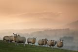 20140401 - Sunset Sheep