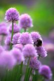 20140603 - Bee