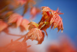 20150426 - Leaves of Orange