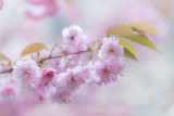 20150429 - Back on the Blossom