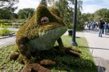 08 – Etats-Unis – Atlanta – Fragiles grenouilles ! - 2