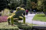 08 – Etats-Unis – Atlanta – Fragiles grenouilles !