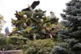 37 -  Canada – Montréal – L'arbre aux oiseaux - 2